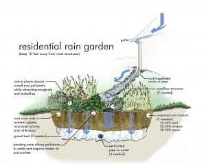 pic rain-garden