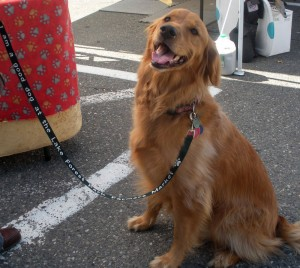 Farmers Market & Dogs
